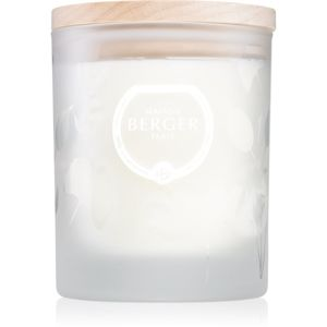 Maison Berger Paris Aroma Focus vonná svíčka Aromatic Leaves 180 g